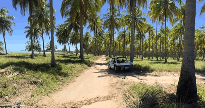 O que fazer em Maragogi: Passeio de buggy