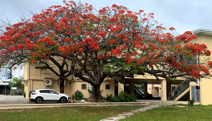 O que fazer nas Ilhas Marshall: Alele Museum