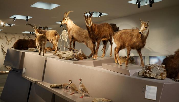 O que fazer em Liechtenstein: Museu Nacional de Liechtenstein