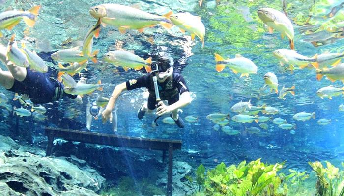 O que fazer em Bonito/MS: Aquário Natural