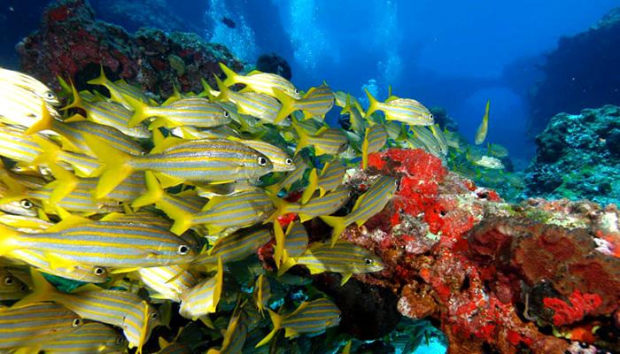 O que fazer em Fernando de Noronha: Mergulho com os Peixes