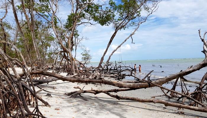 O que fazer em Jericoacoara/CE: Praia do Mangue Seco