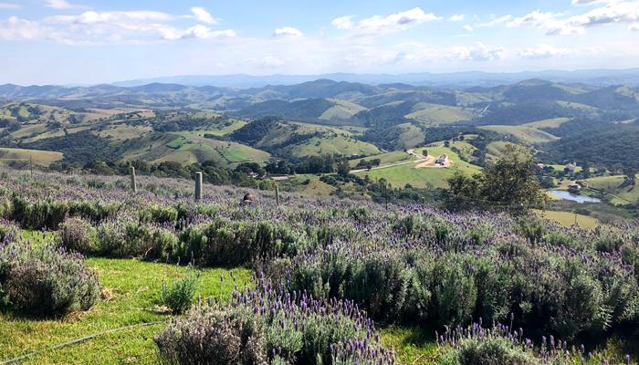 O Que Fazer em Cunha (SP): Campos de Lavanda (Lavandário)