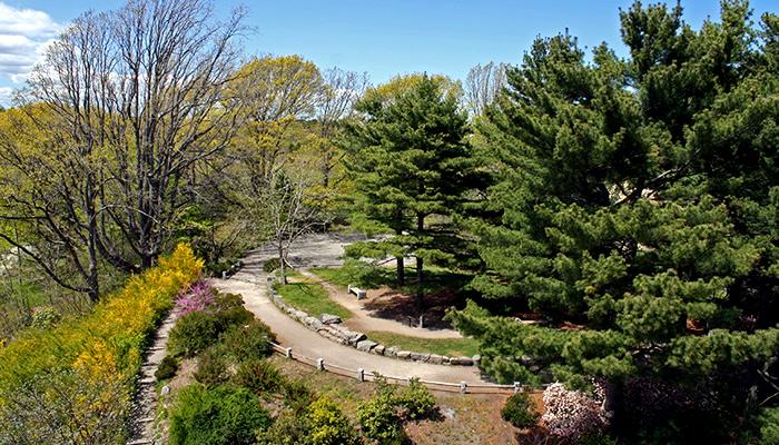Explore o Arnold Arboretum