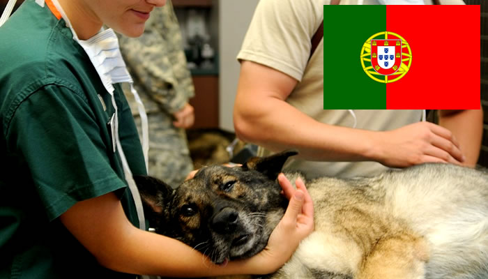 Quanto Ganha um Veterinário em Portugal?