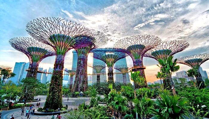 Admirar as incríveis super árvores do Gardens by the Bay