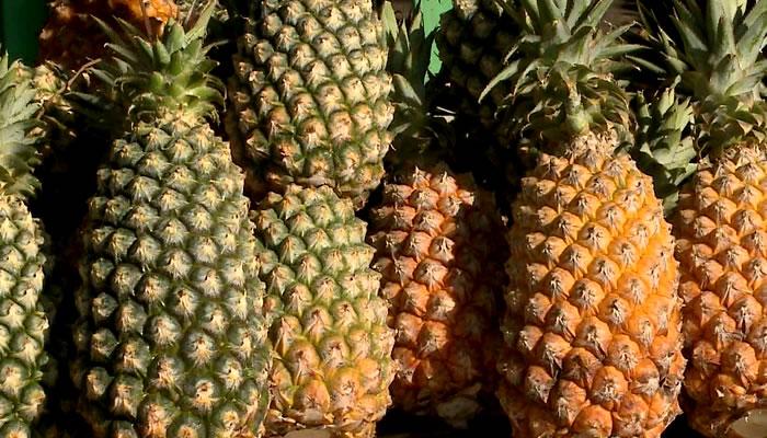 Abacaxi de Turiaçu